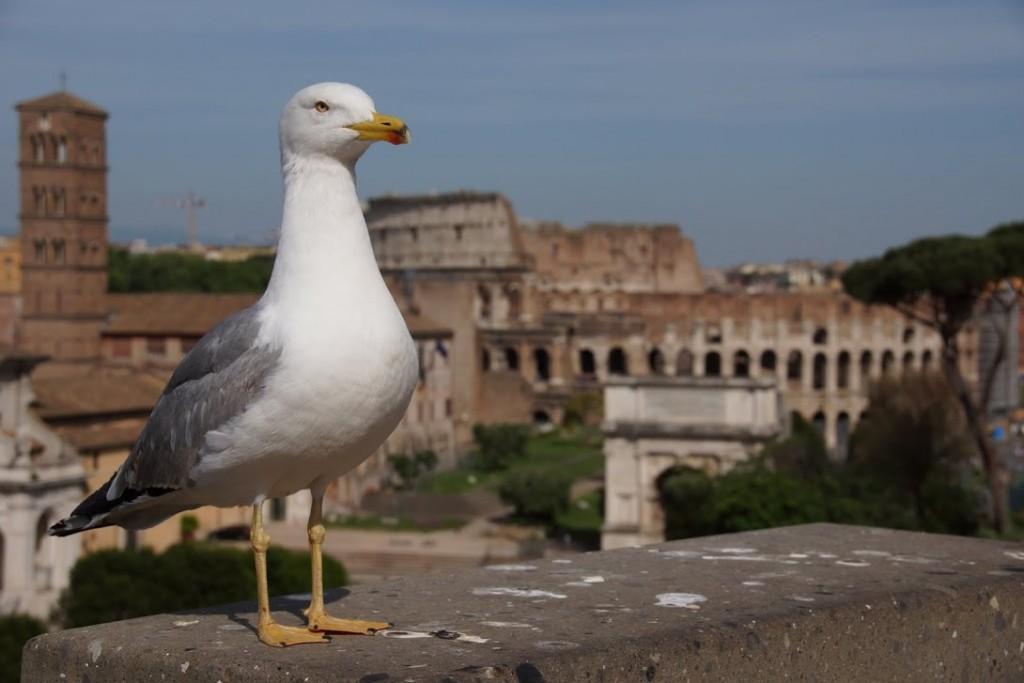 Aussicht vom Monumento a Vittorio Emanuele II