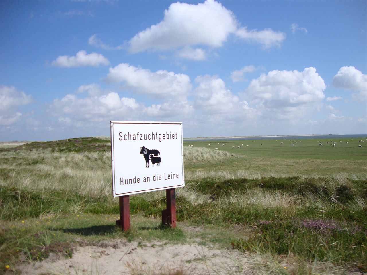 Die nördlichste Schafzucht Deutschlands